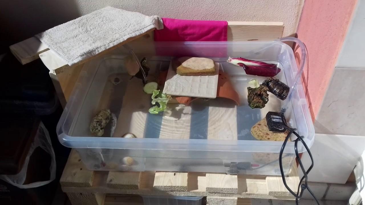 le tartarughe sul terrazzo youtube