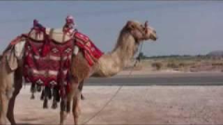 Иудейская пустыня, Кумран и танцующий верблюд