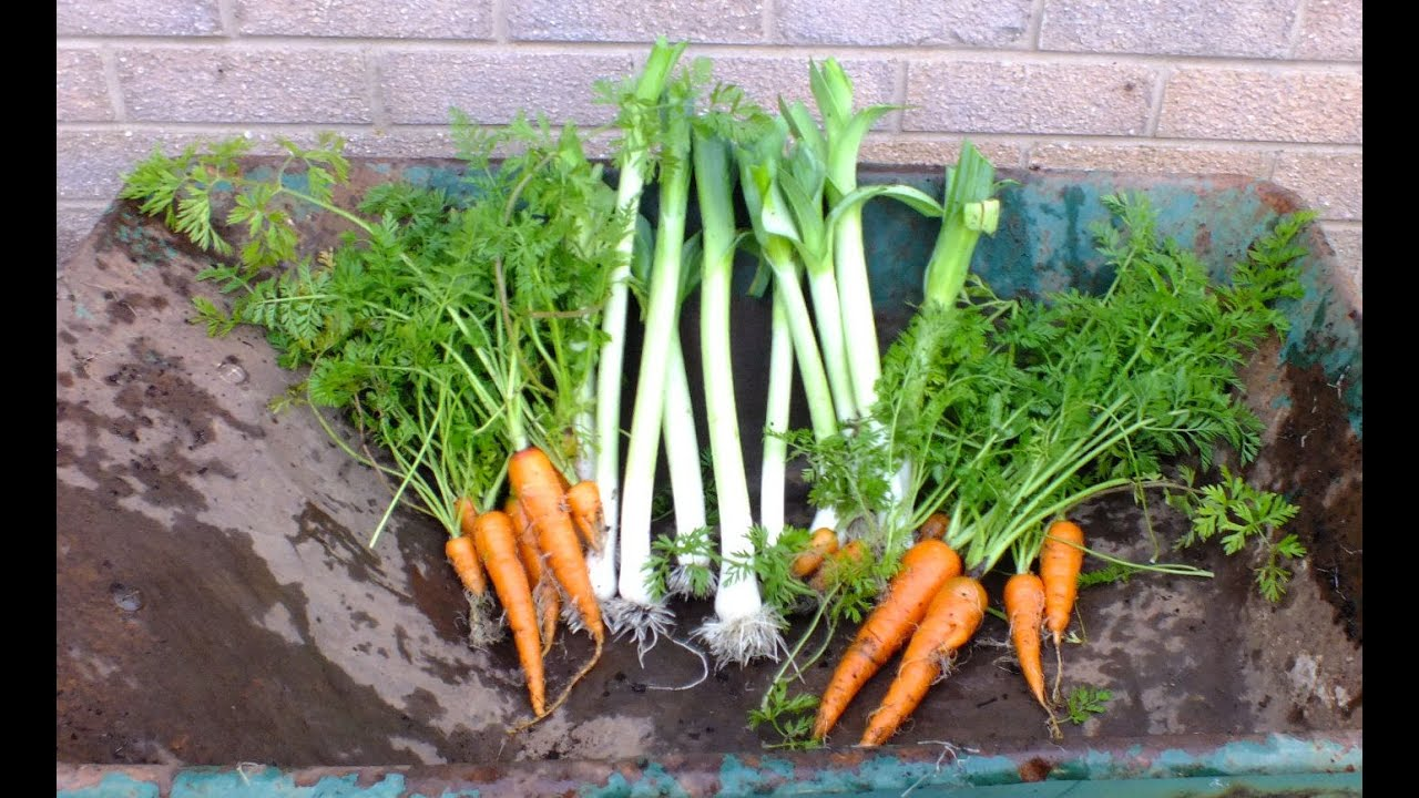 Ordinaire How To Grow Organic Vegetables, Leeks U0026 Carrots In Pots In Your Garden.  Home Grown Veg.