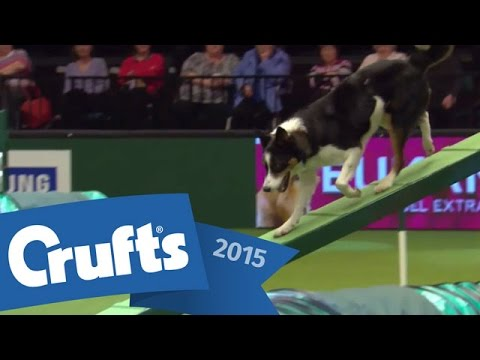YKC Agility Dog of the Year | Crufts 2015