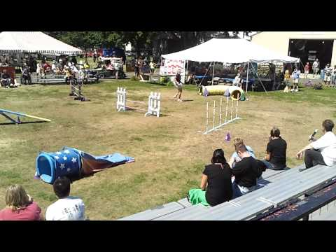 Dog Agility at the Benton County Fair