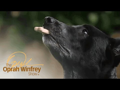 Meet the Amazing Skidboot, a Dog Who Knows Many Tricks | The Oprah Winfrey Show | OWN