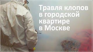 видео Уничтожение клопов, тараканов, крыс в Щелково