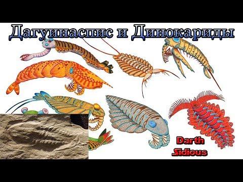 Развитие жизни на Земле (The Evolution of Life) - Дагуинаспис и Динокариды