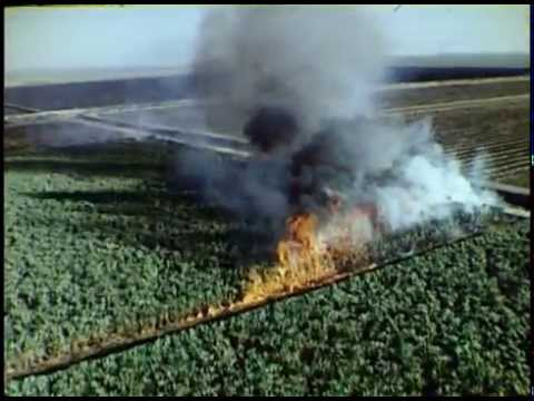Everglades Harvest (Florida's Sugarcane Industry, 1983)