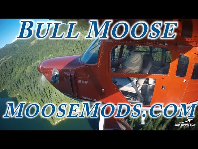 Flying The Bull Moose From Moose  Mods