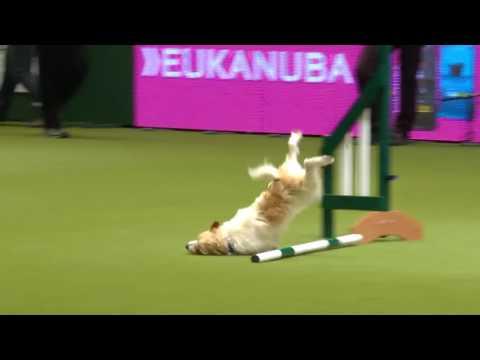 Ozzy Man Reviews: Olly at Crufts
