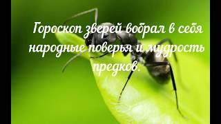 Славянский гороскоп зверей: Рожденный под знаком Муравья  (10 августа — 9 сентября)