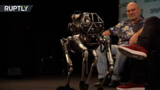 'Kind of a show off'  Meet 'Spot Mini', the dog like robot