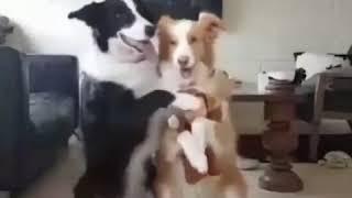 Собаки красиво позируют для семейного фото