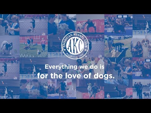 American Kennel Club 135th Anniversary