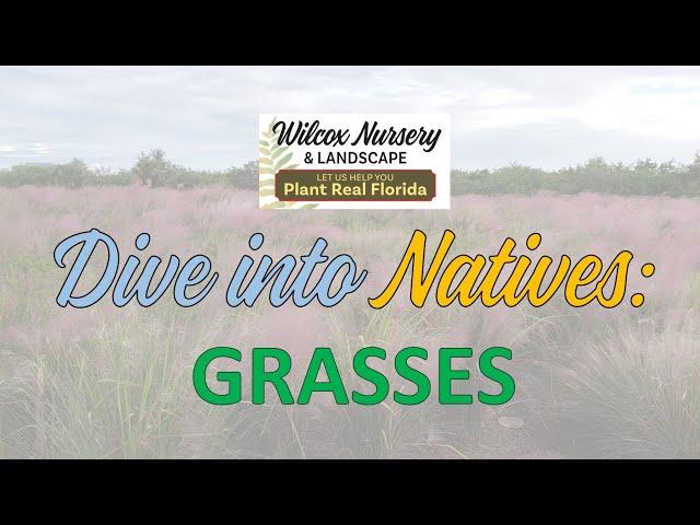 Dive into Natives: Grasses