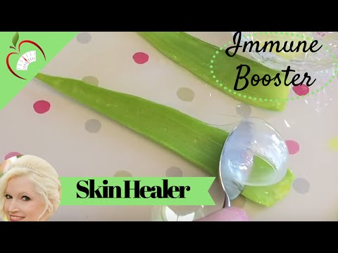 Aloe Vera Plant - Health Benefits How to Use and Extract It