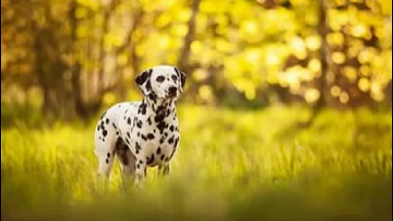 ТеМа: Животные Кошки и Собаки - YouTube