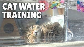Cat's Underwater Navy SEAL Training! | Kittisaurus