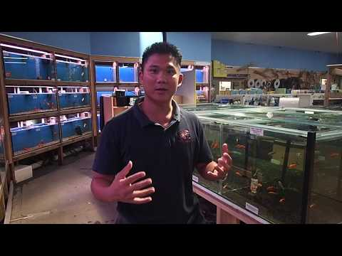 how-to-choose-a-healthy-goldfish-at-a-fish-store-with-fish-veterinarian-dr-loh.