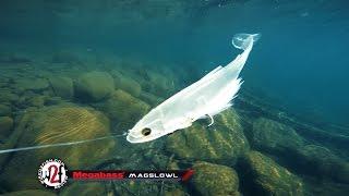 Megabass Magslowl Swimbait Underwater Video