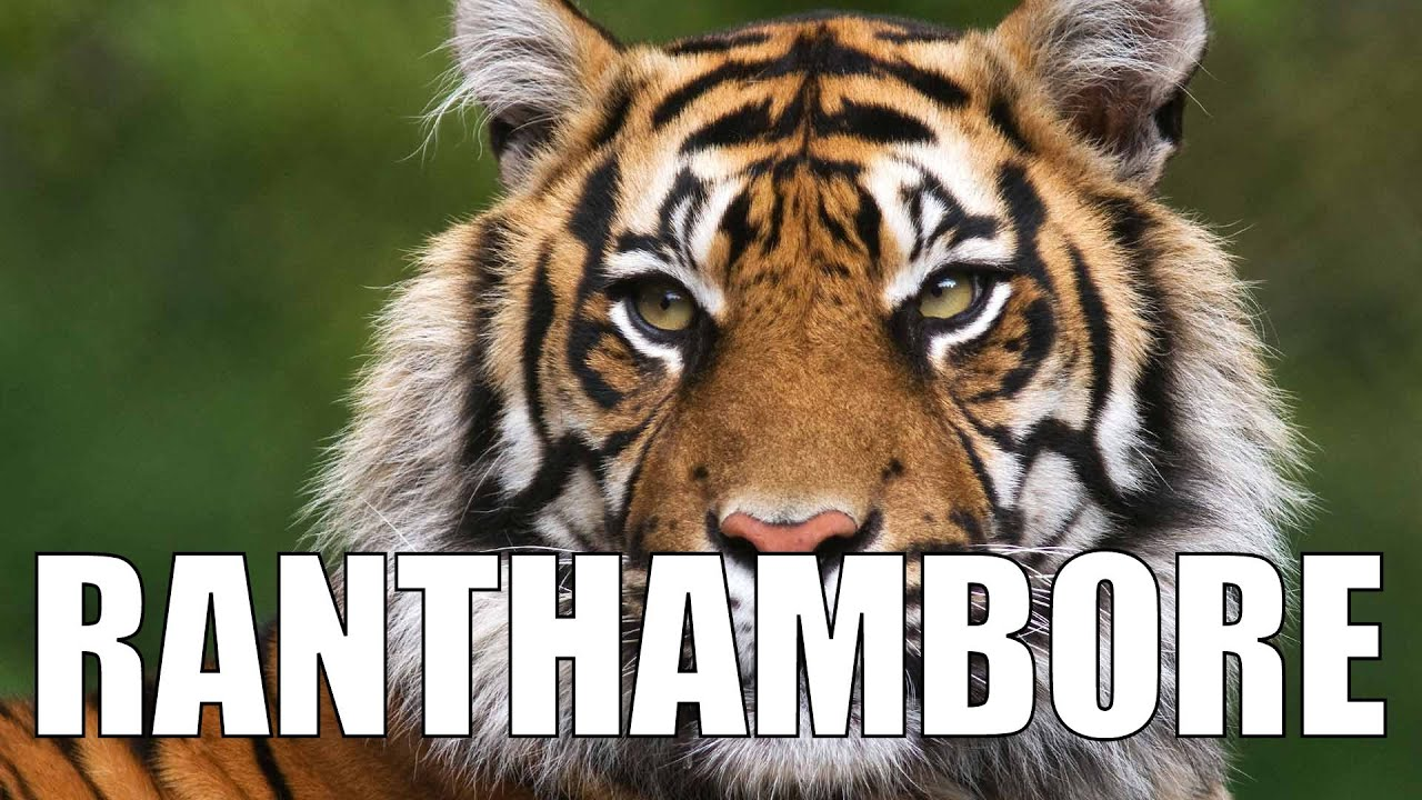 Evening Safari (Tiger sighting!!): Exploring Ranthambore - Ep3