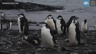 Curiosity and Carnage | Antarctica | Lindblad Expeditions-National Geographic