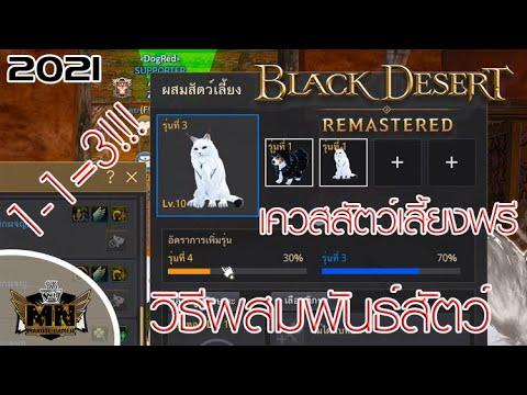 [Black Desert Remastered] วิธีผสมสัตว์เลี้ยง+เควสรับสัตว์เลี้ยงฟรีๆ [2021]