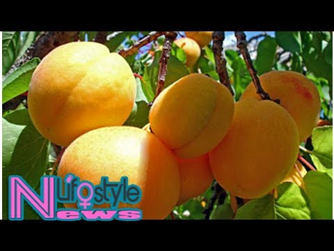 Exports of armenian apricots expected to fall by 40%
