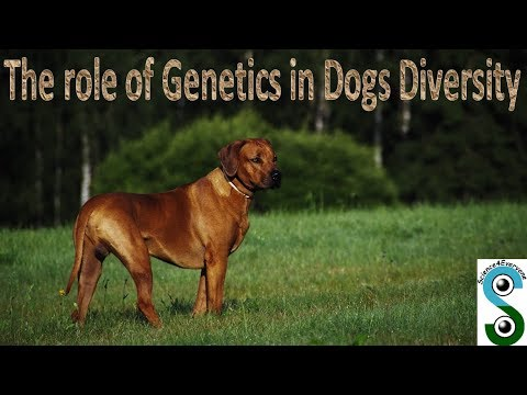 The role of genetics in dogs diversity