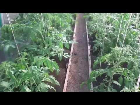 Формирование,пасынкование и обрезка лишних листьев на томатах