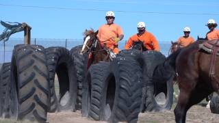 ACTV Presents: The Wild Horse Inmate Program at Florence Prison