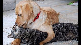 Дружба кошки и собаки. Трогательное и забавное видео.