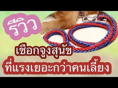 Ep1.รีวิวเชือกจูงสุนัขที่แข็งแรงกว่าคนเลี้ยง