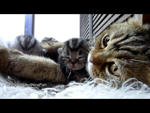 Purr-fect video | Amazing Mother Cat and Cute Baby  Meowing Funny Kittens