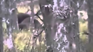 Охота на Медведя огромный медведь   YouTube