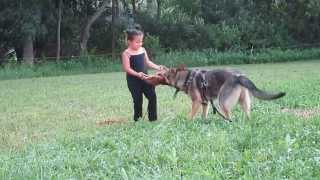 The Most Little Dog Trainers In The World For Protection Only 5 Years Bi 1612