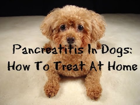 How To Treat Pancreatitis In Dogs At Home