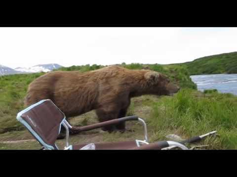 Медведь и мужик со стальными нервами