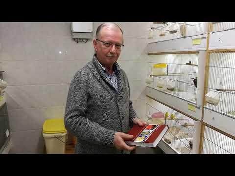 Züchter Besuch Bei Kanarienvogel Züchter  Norbert Schramm