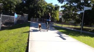 Nooch's Pooches- Teaching To Ride Bike And Run Your Dog At The Same Time!