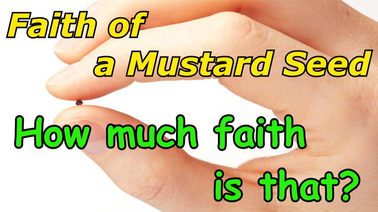 Faith of a Mustard Seed - How Much is That?