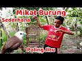Mikat Burung Paling Jitu Pakai Perangkap Sederhana  Mp3 - Mp4 Download
