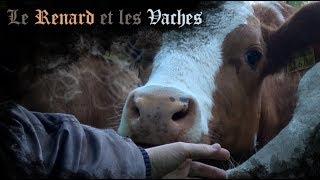 Le Renard et les Vaches
