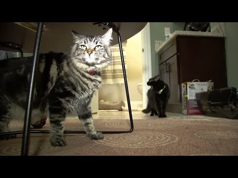 Tony Sandoval on The Breeze - $1,500-a-month San Jose Studio Apartment is being rented to a pair of CATS!