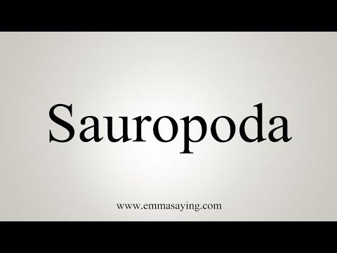 How To Pronounce Sauropoda
