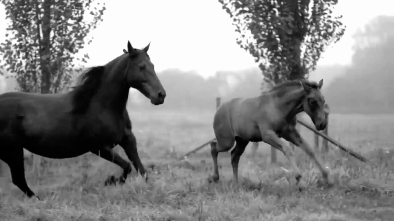 Gay Horses
