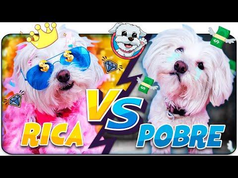 💖Perrita RICA VS Perrita POBRE💖 EXPECTATIVA VS REALIDAD de ser RICO 🐶Anima Dogs