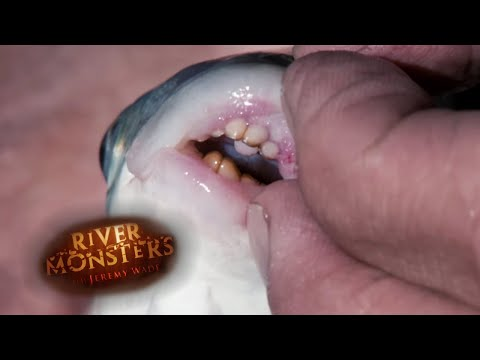This Fish Has HUMAN TEETH! | BOGA | River Monsters