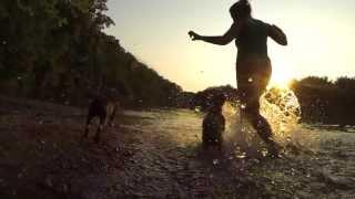 Dubstep Boston Terriers