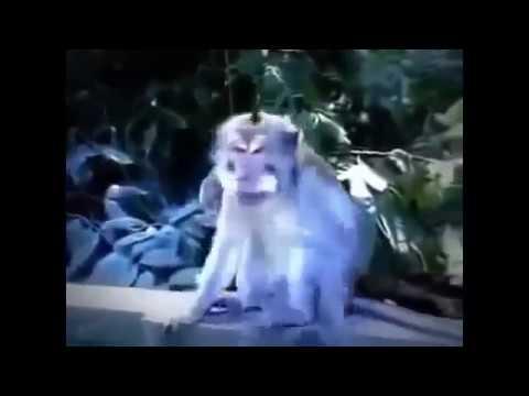 funny videos : khỉ 69 xong rồi ăn tinh trùng của chính nó . tởm vãi.
