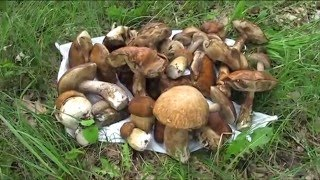 Секреты грибника Охота за грибами 2016 (Дневник рыболова)