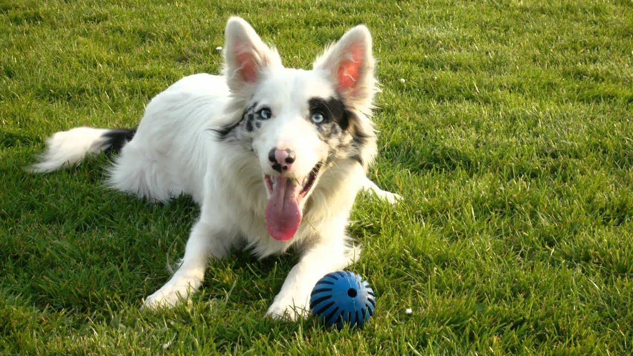 10 Most Aggressive Dog Breeds Temperament Ratings and