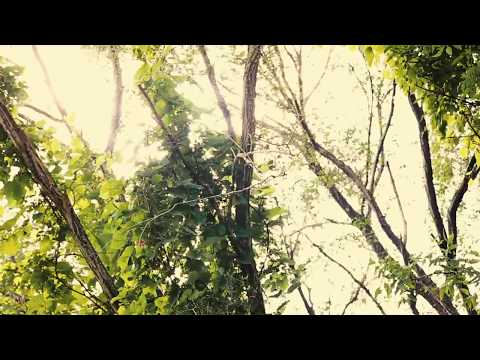 """Sun"" - Sleeping At Last (Micro Music Video)"